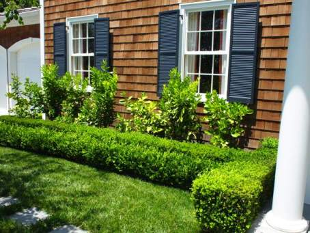After - Double Row of Boxwood Frames the Citrus